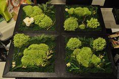 Картинки по запросу картины из мха фото Broccoli, Herbs, Vegetables, Herb, Vegetable Recipes, Veggies, Medicinal Plants