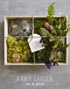 DIY Fairy Garden in a Box  - Perfect gift for my grandchildren (I will have to replace the fairy with a pirate, LOL)!  Great site/loads of ideas!