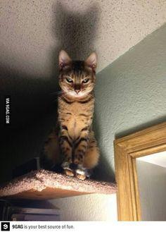 I. Am. Catman!