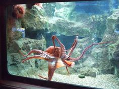 facts-about-the-majestic-alien-on-earth-known-as-the-octopus-30-photos-1.jpg (1024×768)