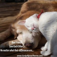 Real Friends #CatLOVE #DogLOVE