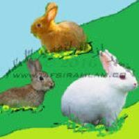 الأرانب في المنام Animals Rabbit