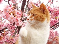http://cybergata.tumblr.com/post/80112141698/cybergata-sakura-cat-punch-because-she-cant  http://cybergata.tumblr.com/