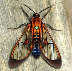 Image result for beautiful insects
