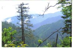 Samplings from Spring Creek: Mt. LeConte Great Smokey Mountains National Park