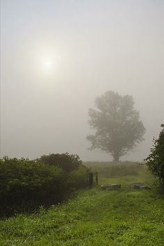 Foggy Morning Tree - Photography by Christina Rollo