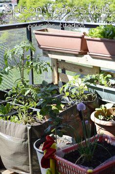 Jardinage sur le balcon : chuuuut ! ça pousse !   Clémentine la Mandarine