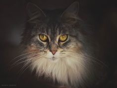 Golden eyes by Kerstin Johannes on 500px