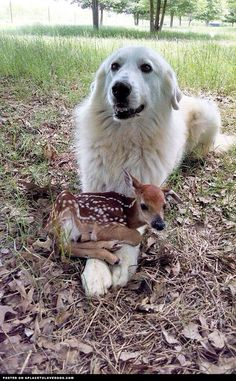 Doggy Master Post: Part 6 - Imgur