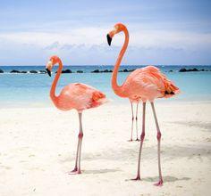 Flamingo wallpaper - Animal Backgroundsanimal-backgrounds.com