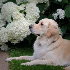 Golden in the Garden