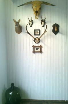 DIY Trophy wall with a bull, deer, butterflies, bug and antlers on a white wooden wall.