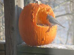 Fall Gratitude...pumpkin bird feeder