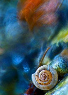 80 Stunning Macro Photographs By Magdalena Wasiczek — Photography Office Douglas Adams, Photography Office, Macro Photography, Photo Bokeh, Shells And Sand, Bokeh Lights, Insect Art, Happy Paintings, Foto Art