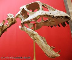 Crâne d'Euhelopus
