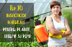 Vegetable Garden, Feelings, Mai, Classy, Outdoors, Lunch, Gardening, Simple, Tips