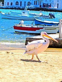 Mykonos , Greece #KSadventure #KendraScott