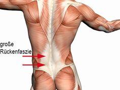 Faszien – Bindegewebe und Rückenprobleme | Gesundheitsberatung AT