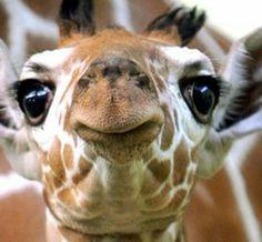 Funny angle giraffe reaction