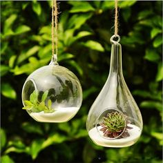 Get 21 hanging glass terrarium ideas to decorate your home and pursue your small gardening. Learn how to setup a hanging glass terrarium to decorate your room. Terrarium Diy, Hanging Glass Terrarium, Terrarium Containers, Air Plant Terrarium, Hanging Vases, Glass Planter, Bottle Terrarium, Terrarium Supplies, Terrarium Wedding