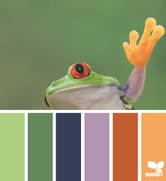 This triadic colour scheme screams look at me. However, if you look at the frog…