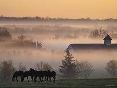 Kentucky Horse Park- Lexington
