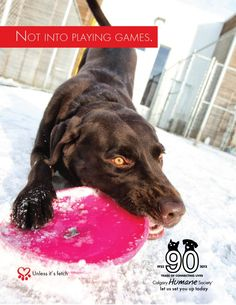 Not into playing games. Unless it's fetch. From the Calgary Humane Society's FB page.