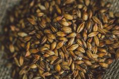 MALT: THE BACKBONE OF BEER