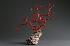 Finch & Co - Antique Natural Specimen of a Branch of Red Coral probably from the Sicilian Sea near Trapani