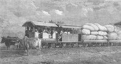Bullocks hauling Train - Dabhoi