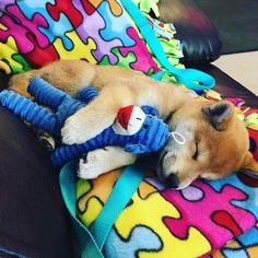Sweet dreams 💤 via Kawaii Cute, Shiba Inu, Cute Baby Animals, Sweet Dreams, Dachshund, Doggies, Scooby Doo, Cute Cats, Fur Babies