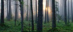 Shinrin Yoku Oil Forest Bathing aromatherapy blend | Etsy Smells like the woods.