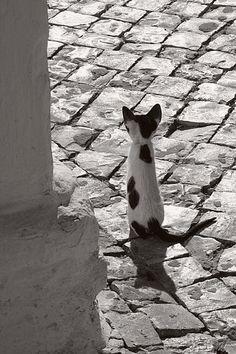 teaintheafternoon: (via Tiny Cat by faraujo, a photo from Algarve, South | TrekEarth)