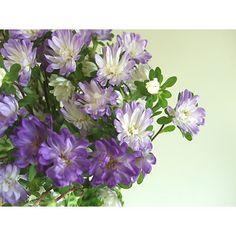 【生花】アスター ステラトップブルー:::切り花・生花 の通販なら - はなどんやアソシエ