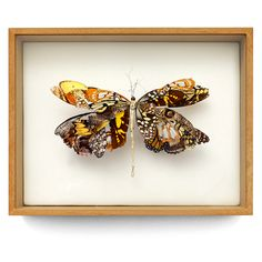 """African Queen"" is wrapped in a royal african dress made from a patchwork of butterfly wings. (w:26 h:20 d:5.5 cm)"
