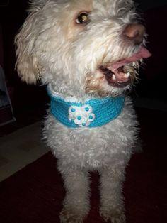 Dog accessory