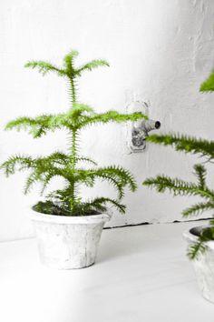 Tiny Xmas tree