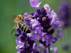 Macro garden flower bee