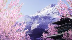 Blooming blossoms by RenatoSs.deviantart.com on @DeviantArt photomanipulation