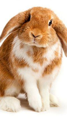 cute bunny / rabbit