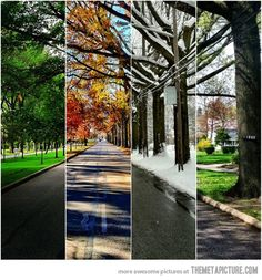 Take the same picture of your house or favorite spot during each season. Go to Staples and have a large print made. Hang and enjoy!