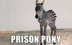 29 Spot-on Alternate Animal Names - Funny Gallery