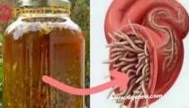 The Best Antibiotic, Natural and Removes Every Infection and Parasite! Natural Cures, Natural Healing, Natural News, Natural Foods, Healthy Drinks, Healthy Tips, Healthy Food, Stay Healthy, Eating Healthy