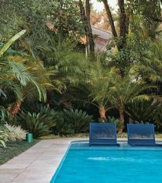 Gilberto Elkis - Palmeiras-fênix, cicas e comigo-ninguém-pode cercam a piscina