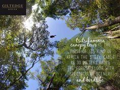 Garden Route | Tsitsikamma Canopy Tour