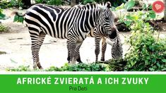 Africké zvieratká pre deti - Africke zvierata a ich zvuky - Zvierata zo ZOO Animals, Youtube, Africa, Projects, Carnavals, Animales, Animaux, Animal, Animais