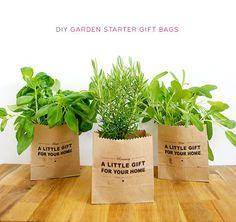 More homemade gift ideas....these herb filled gift bags would be great for gardeners and chefs alike.