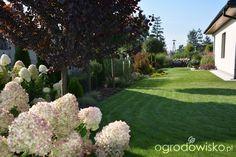 Mój skromny ogród - strona 401 - Forum ogrodnicze - Ogrodowisko