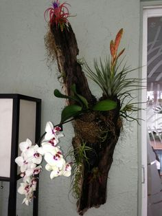 Driftwood Orchid, bromeliad and airplant arrangement.