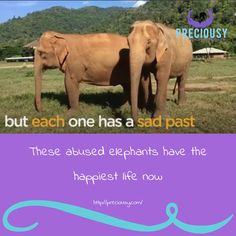 what a 'Wonderful World' this is  https://www.thedodo.com/happy-elephants-sanctuary-video-2230643343.html